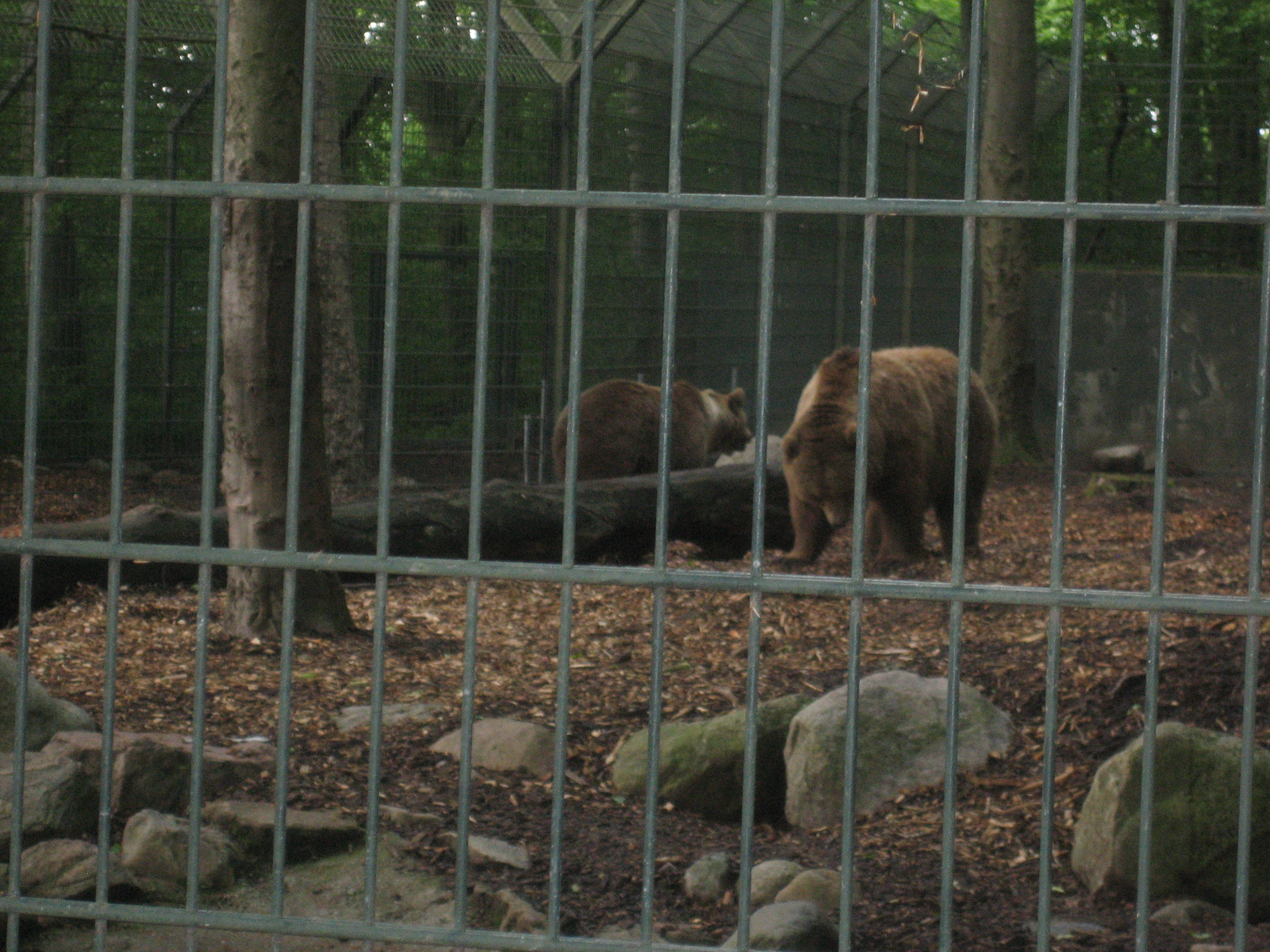 aarhus zoo Enhver sidste